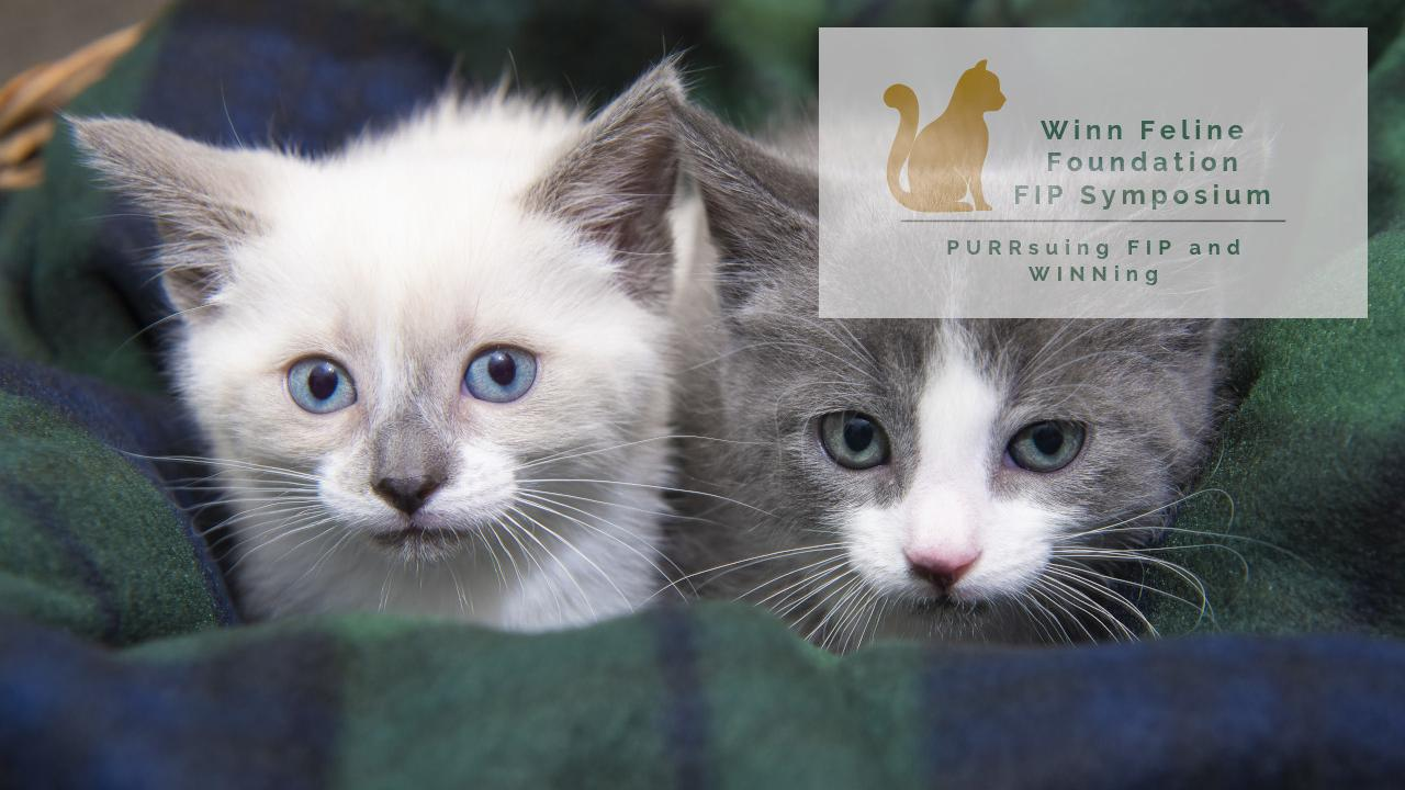 Picture of gray and white kittens and Winn Feline logo