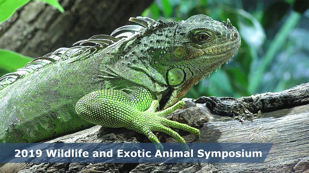 2019 Wildlife And Exotic Animal Symposium School Of Veterinary