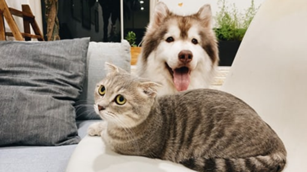 Photo of dog and cat