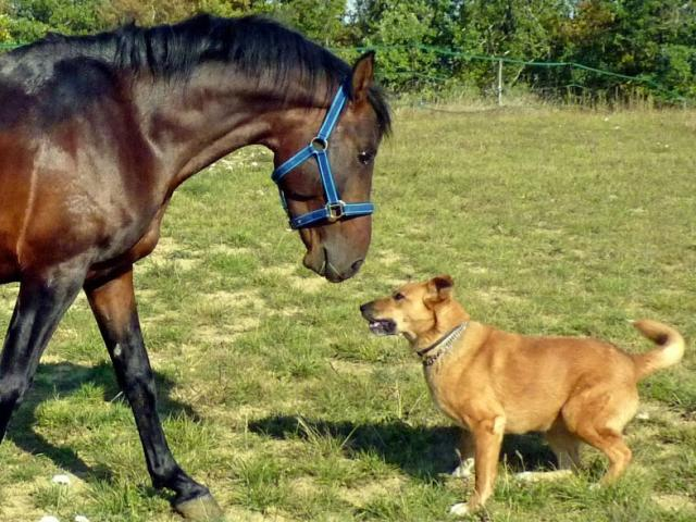 photo of horse and dog playing